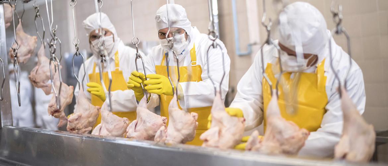 ChickenProcessing2
